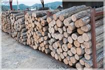 ほだ木に使う原木は、貴重な広島県北産のナラの木を使用。